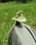 Needle_Felted_Green_Dragon_by_tallydragon